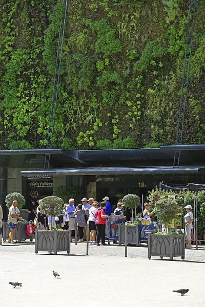 France, Vaucluse (84), Avignon, place Pie, les Halles, mur vegetal oeuvre de Patrick Blanc